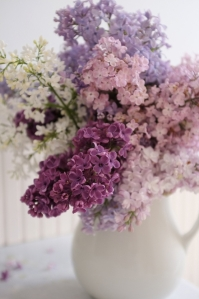 A beautiful bouquet of lilacs, which symbolise first emotions of love