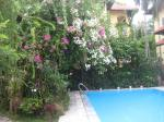 Bougainvillea around the pool at Orchid Garden Homestay