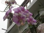 Orchids outside the breakfast room