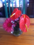 Anthurium & Gerbera at Windmills Cafe